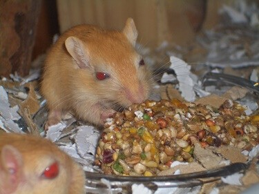 why does my gerbil bite me?